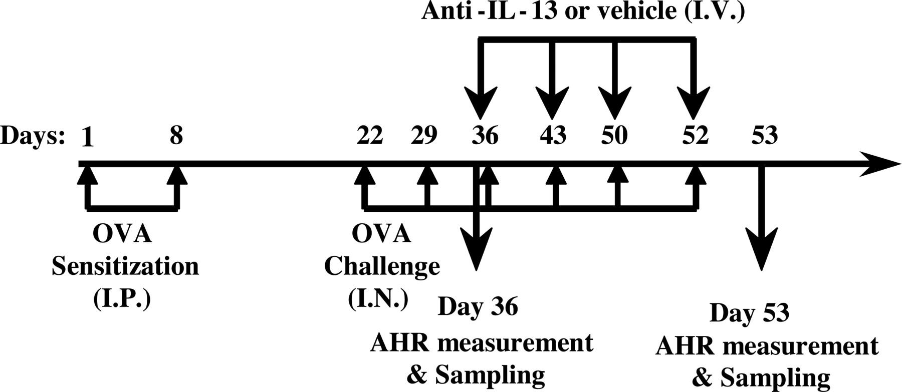 Therapeutic Dosing with Anti-Interleukin-13 Monoclonal