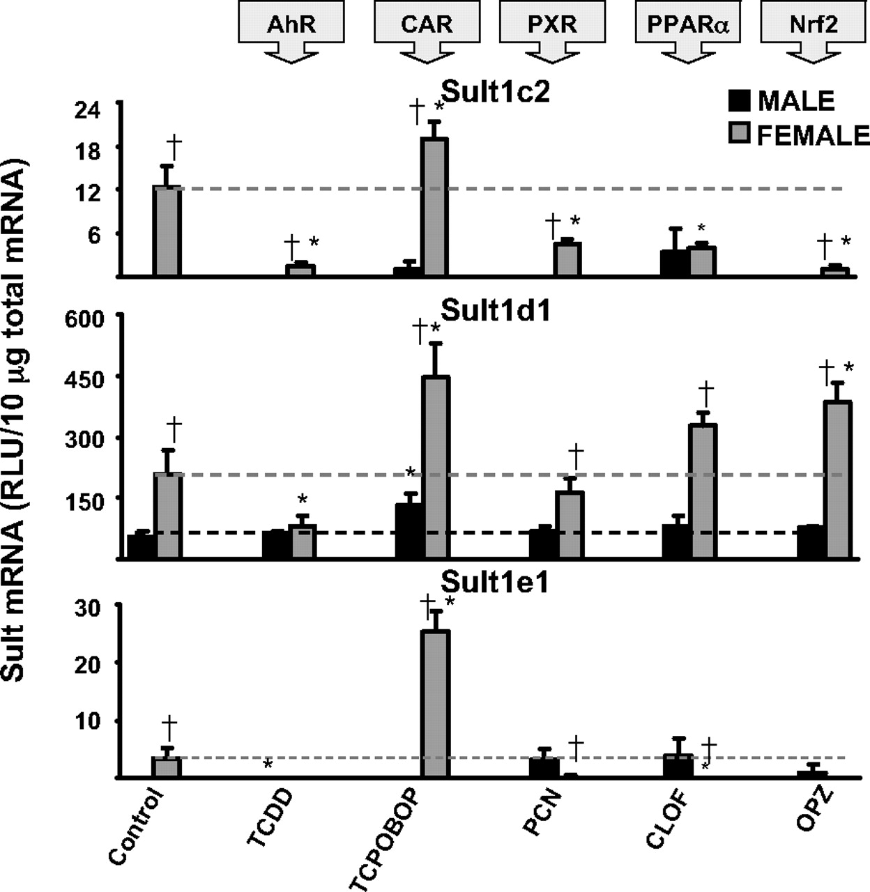 Regulation of Sulfotransferase Enzymes by Prototypical