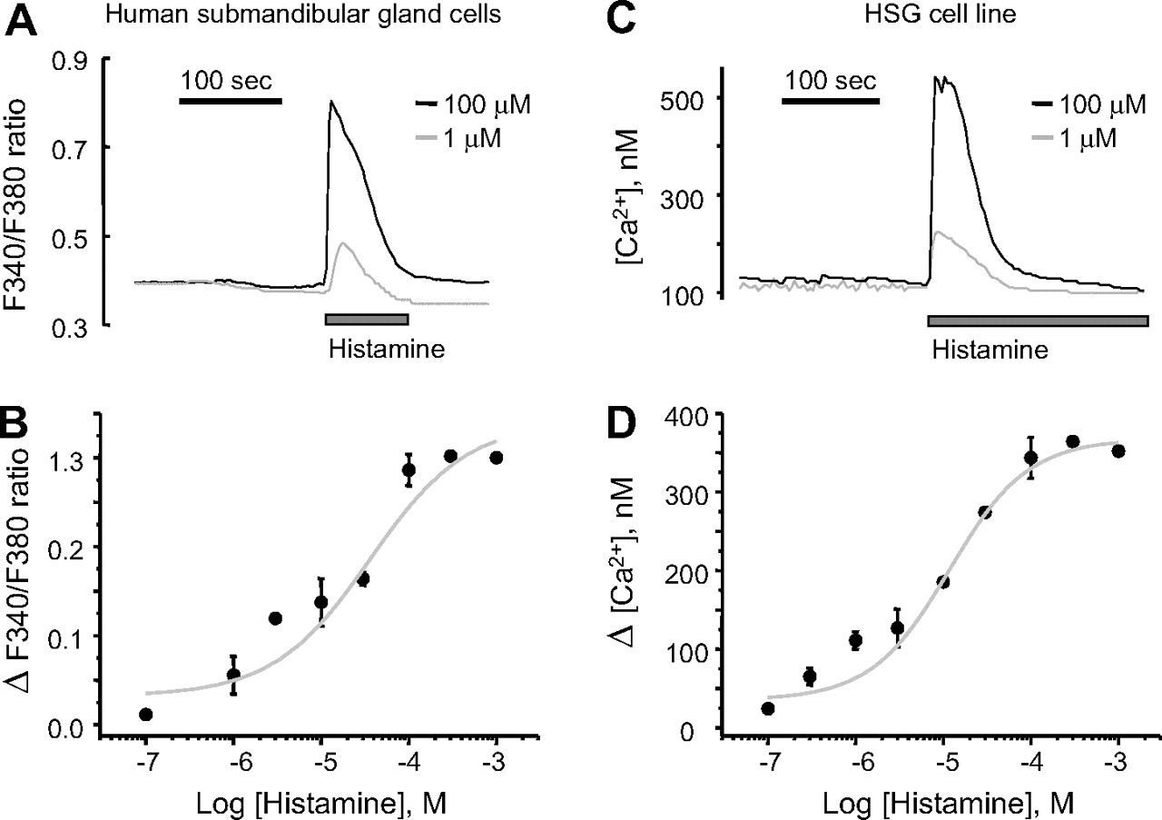 Histamine H1 Receptor Induces Cytosolic Calcium Increase