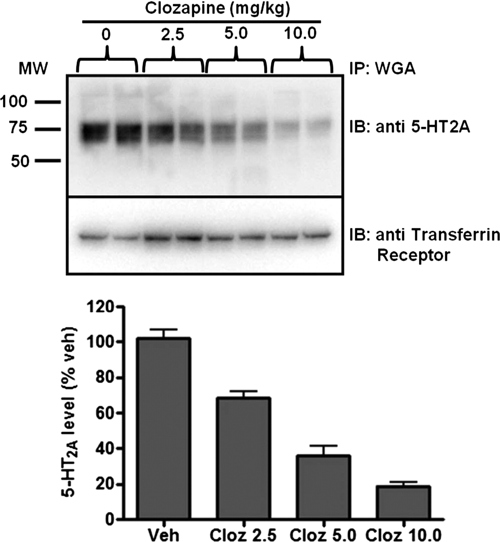 Antagonist Functional Selectivity 5 Ht2a Serotonin Receptor Antagonists Differentially Regulate