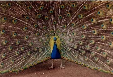 jpf oiseaux blogspirit