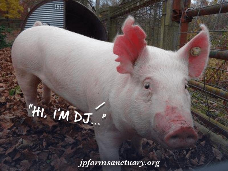 DJ has arrived on the JP Farm Animal Sanctuary