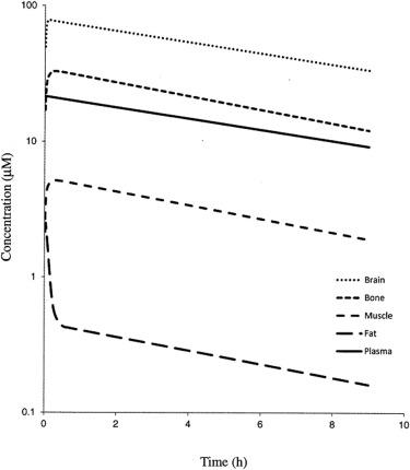 Exploration of PBPK Model—Calculation of Drug Time Course