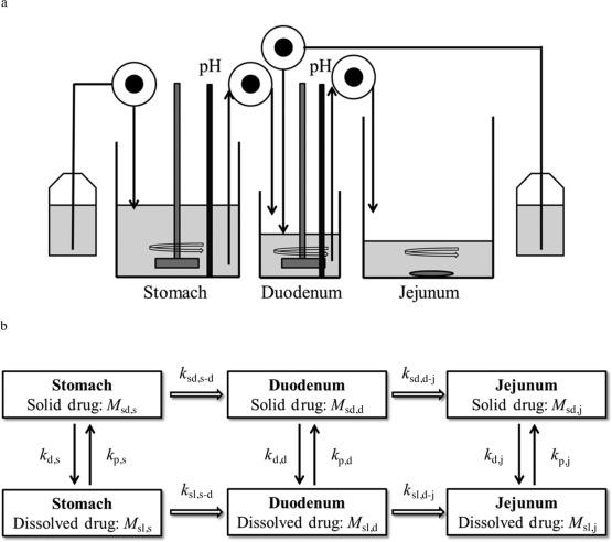 Evaluation of a Three Compartment In Vitro