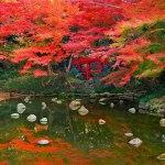 가을 단풍으로 물든 공원