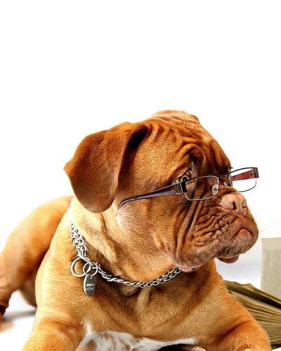 doggy-bootcamp