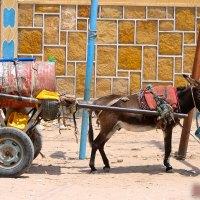 Water-Donkey-Hargeisa-Somaliland