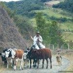 A Cowboy in Buga