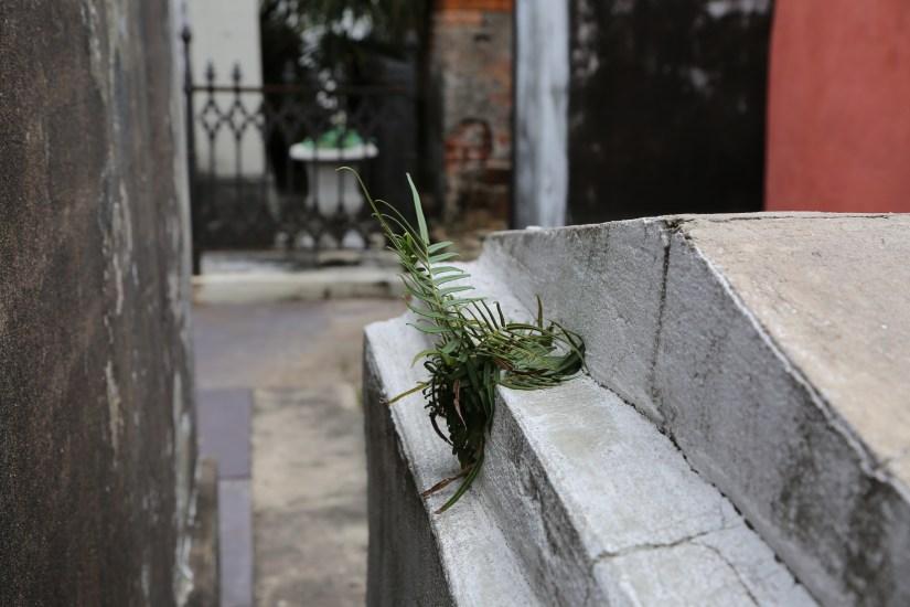 Dragon/Dimitry Tomb St Louis #1
