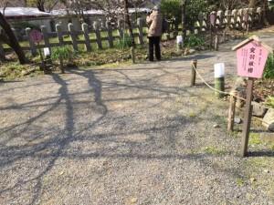 平野神社 境内