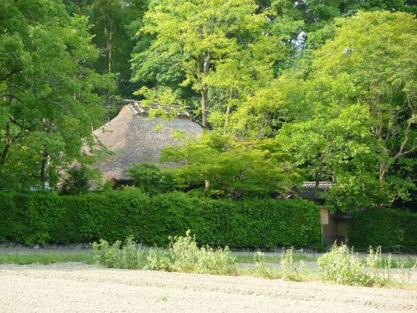 京都 嵯峨野めぐり 穴場観光スポットはどこ?