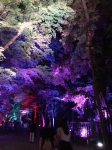 下鴨神社ライトアップ1.JPG