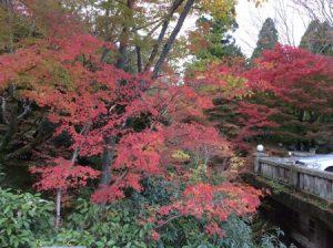 京都 紅葉の穴場 しょうざん