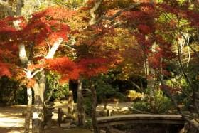 宮島紅葉谷公園