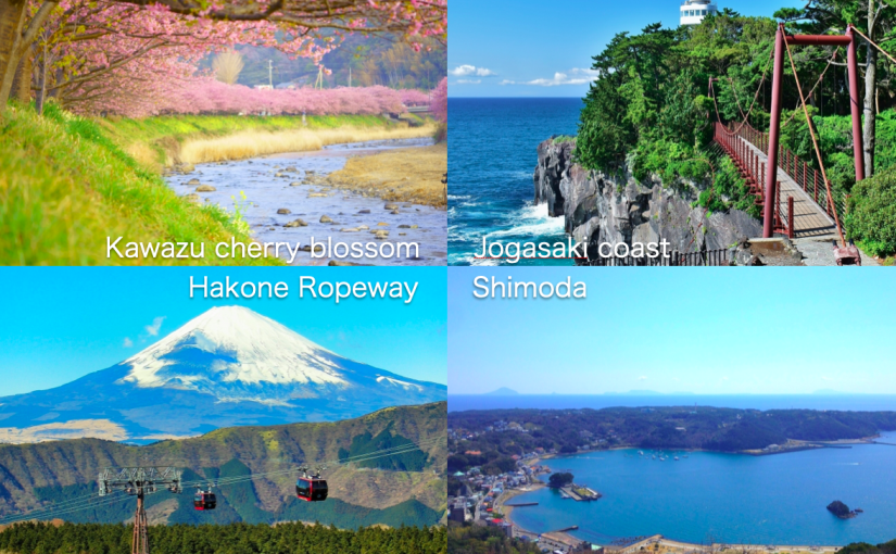 Hakone and Izu, Kawazu Zakura early cherry blossom viewing 2-day sample trip plan
