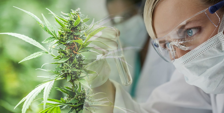 Cannabinoid Medical Sciences
