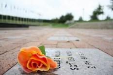 Rose At Veterans' Memorial