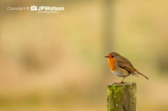 Robin Having A Rest On The Post