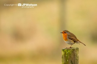 Robin-Having-A-Rest-On-The-Post