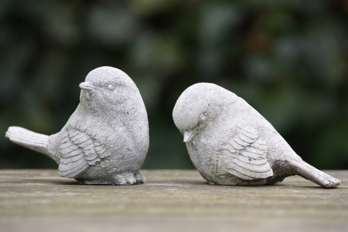 Picture of bird rejecting another bird