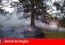 Encontro no meio do mato resultou em queimada
