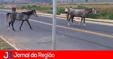 """Cavalos """"conhecem"""" a nova Rua Oito"""