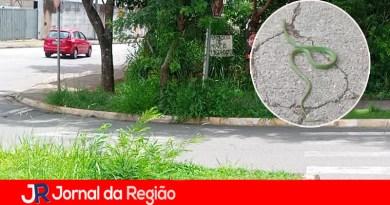Leitora encontra cobra em calçada no Retiro