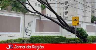 Árvore cai sobre muro de condomínio na Ponte São João