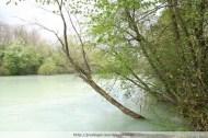 Flooded bank vegetation, River Erlauf, Spring 2009
