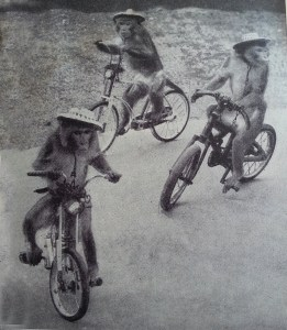 Monkeys on bicycles Just Riding Along