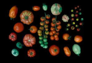 tomates-781634