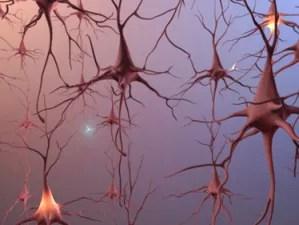 neuron_forest