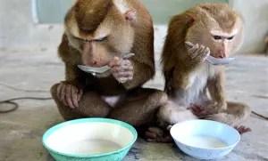 monkeys_20023a