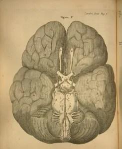 14-m314-brain-image_hi