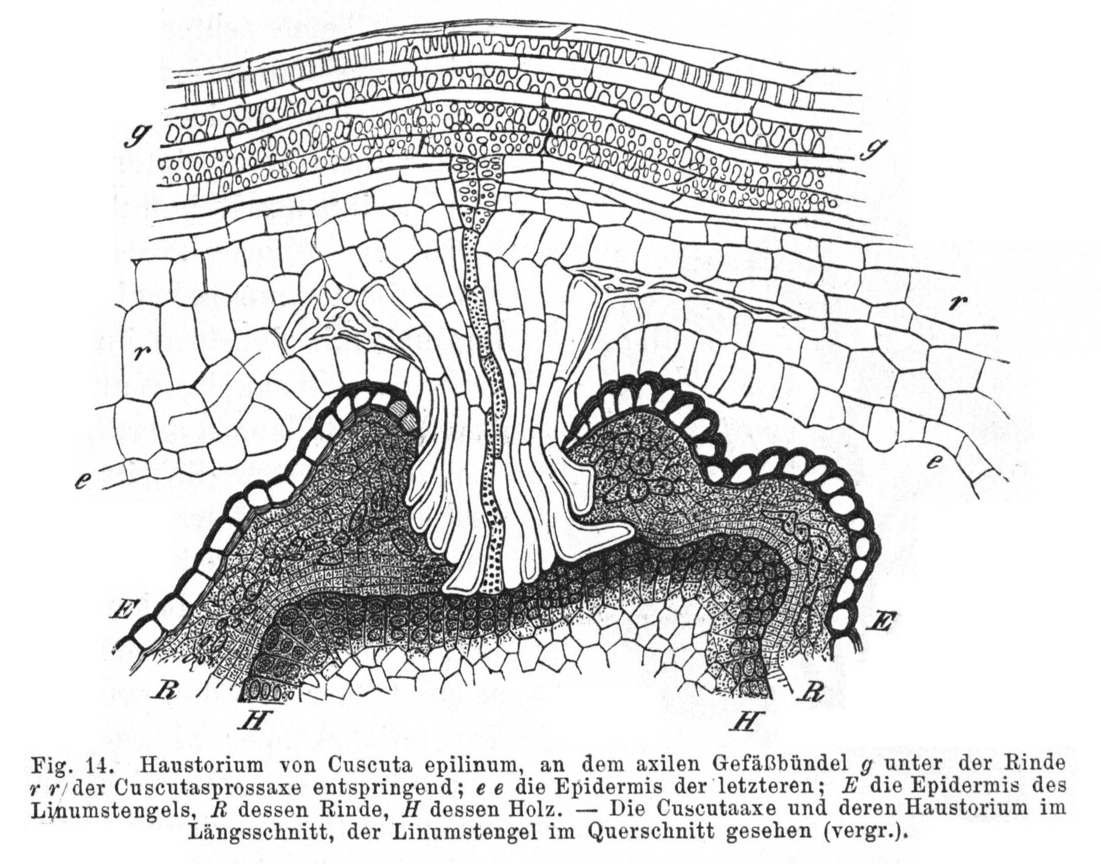 El Olfato De Las Plantas Neurociencia