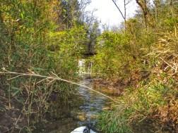 Creek feeding the Buffalo river.