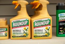 News24.com | Monsanto purchaser Bayer not seeking Supreme Court appeal of ruling that Roundup herbicide caused cancer