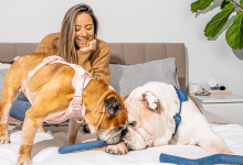 Wild One's pet products seamlessly blend graceful and take note