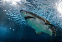 Scientists discover rare species of shark that lived over 90 million years ago, see pics