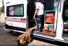 Viral video: Dog chases ambulance with sick owner all the way to hospital, leaves netizens emotional