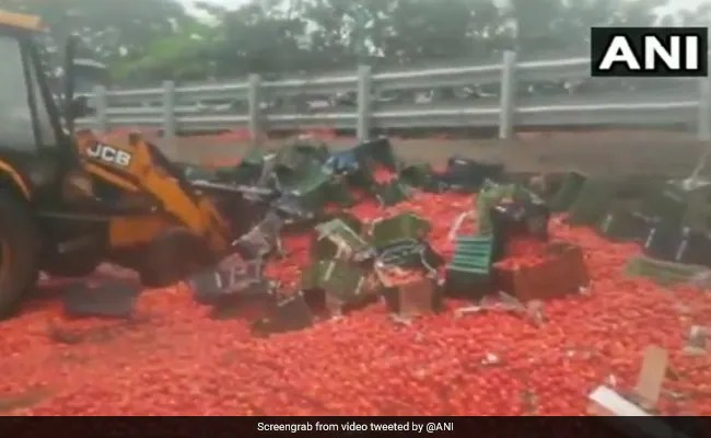 महाराष्ट्र सरकार टमाटर की खरीद करे, नुकसान होने पर केंद्र करेगा मदद: भारती पवार