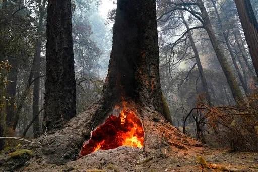 आग बढ़ने पर सिकोइया नेशनल पार्क के विशालकाय पेड़ खतरे में