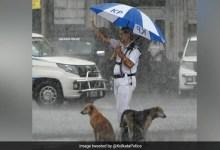 भारी बारिश में ट्रैफिक पुलिसकर्मी ने बेसहारा कुत्तों को अपनी छतरी के नीचे दिया सहारा