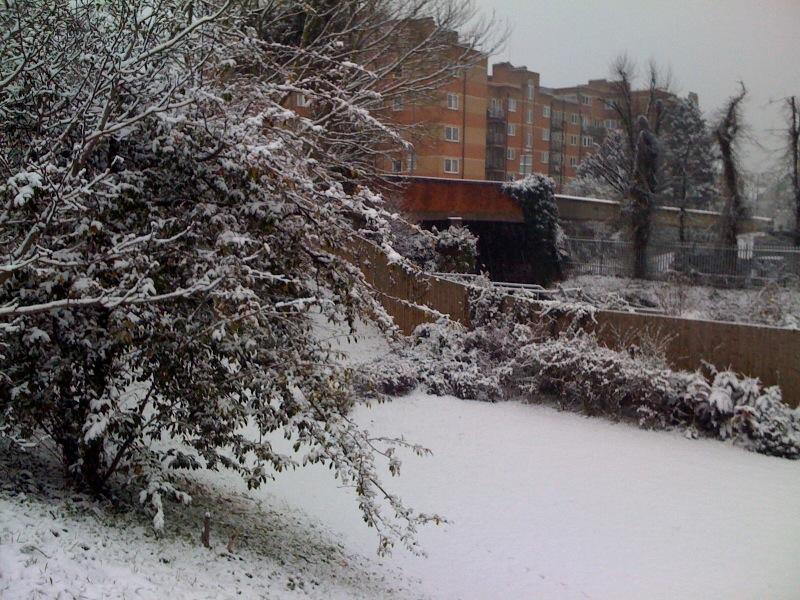 Snow 2010 1