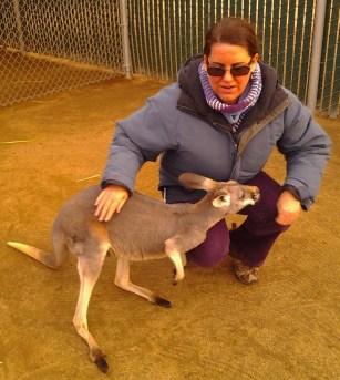 kangaroo, zoo, volunteering, nonprofits, animal sanctuary