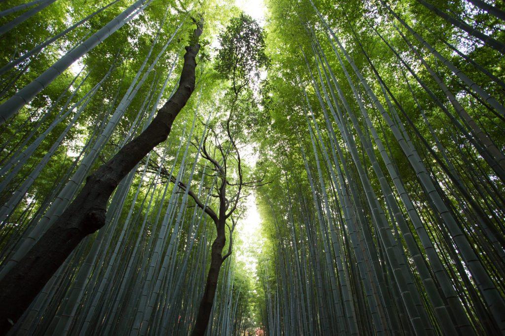 Busca por saúde e bem-estar impulsiona o turismo em áreas naturais