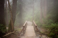 Fog sets in on a trail to the summit of Dog Mountain in British Columbia in August 2015.