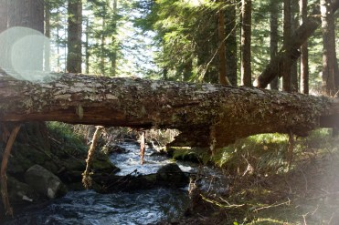 Fanton Creek runs parallel to a portion of a trail leading to the summit of Tumala Mountain in the Mount Hood National Forest.