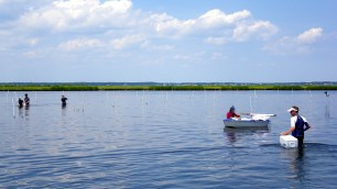 The Marine Biodiversity Lab prepares for a day of fieldwork at Goodwin Island, York River, Virginia