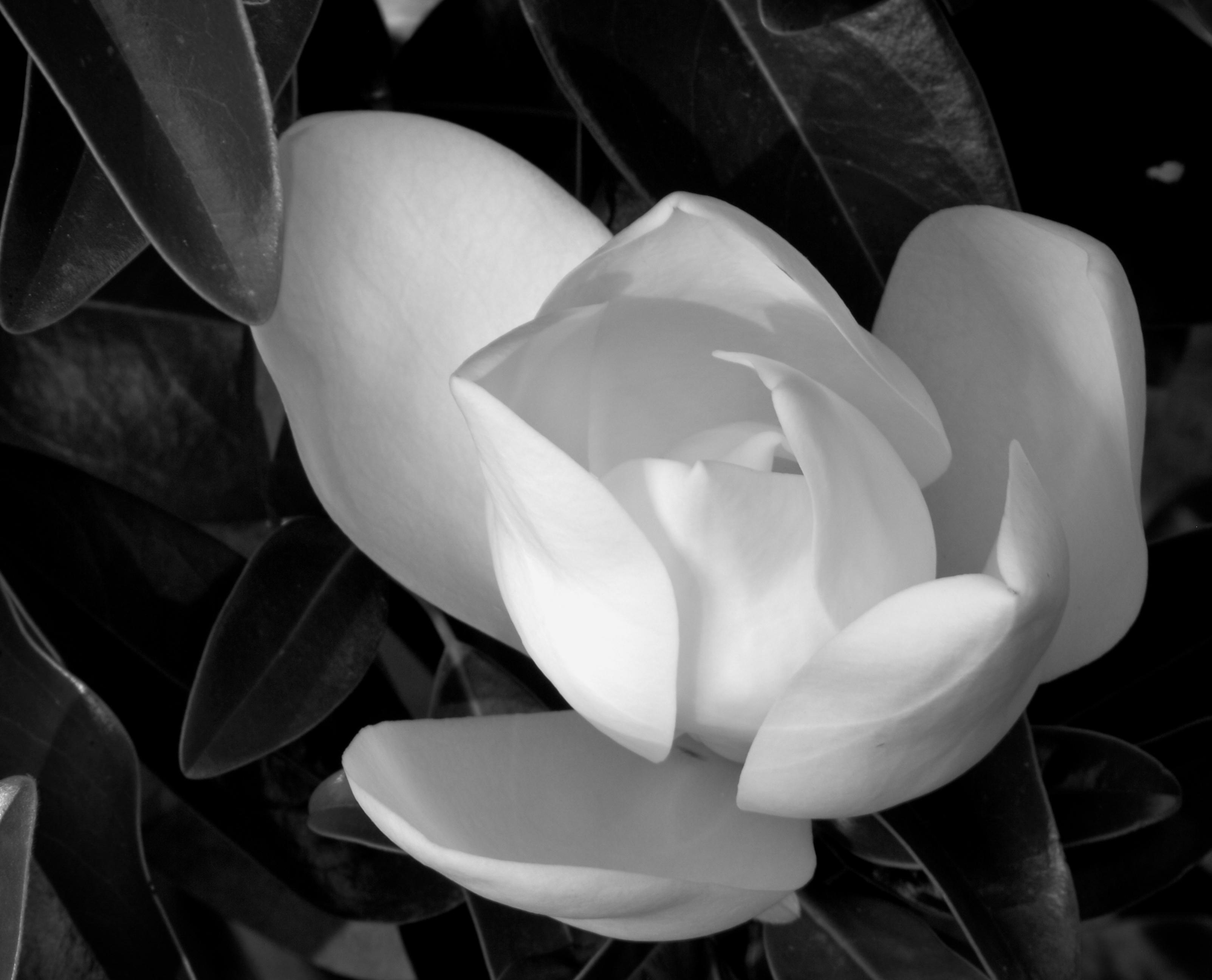 Black and White  JSR75